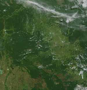 Environmental Issues: Deforestation of Brazil / Amazon Basin