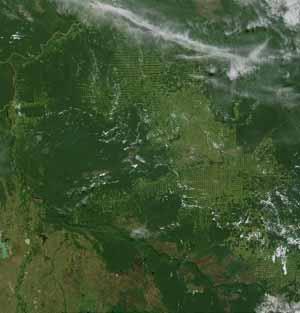Environmental Issues: Deforestation of Brazil / Amazon Basin