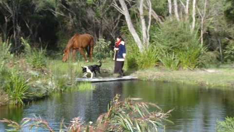 Woman, horse and dog by pond