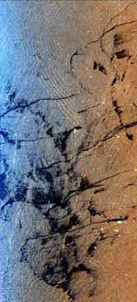 Environmental Pollution: Space Radar Image of Oil Slick